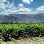Venta de bodegas y de viñedos en España