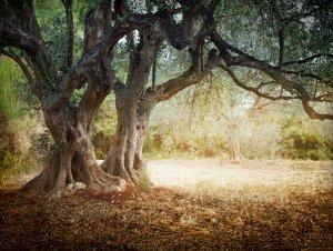 Venta de fincas Invertir en la compra finca de olivos