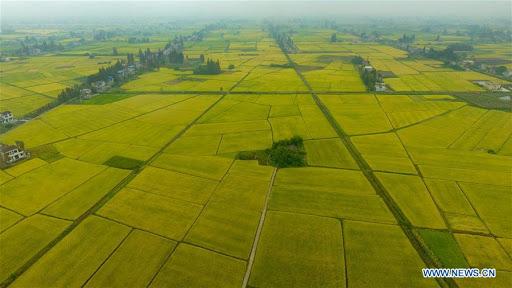 Invertir en Tierras agrícolas en España