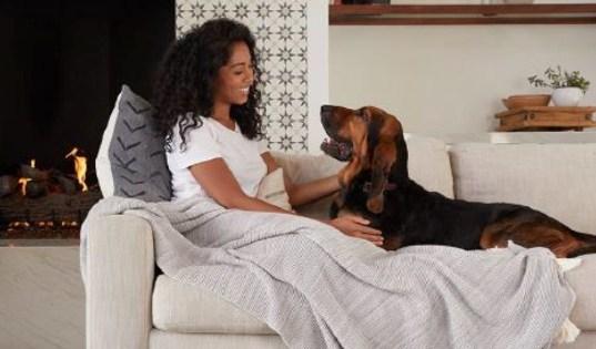 Montar una empresa de belleza y cuidado de perros